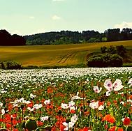 Letní krajina