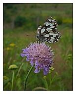 je tu málo motýlů :-)