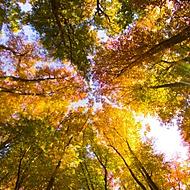 Podzim na Konopišti