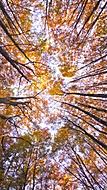 Podzim ve Hvězdě