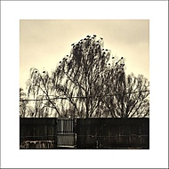Odpočinok na strome. (Ivan 76) – LG G3 32GB