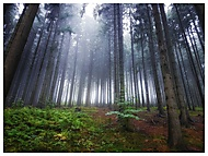 V lese z rána