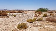 Arabská poušť
