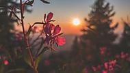 Poslední paprsky slunce