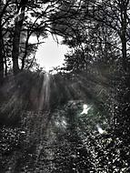 Duchové světla
