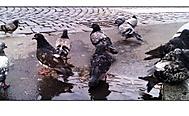 Ptáčci při koupeli