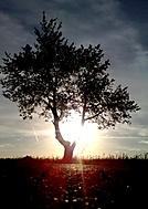Západ slunce mezi třešní