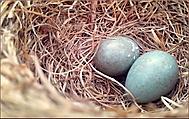 Vitajte u dvoch vajec