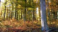 Adamovský les