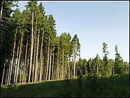 Po ránu v lese