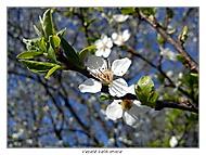 Veselé Velikonoce  Teplejší Jaro :-)