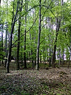 Někde v lese...