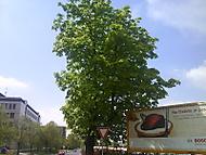 Rozkvetlej strom