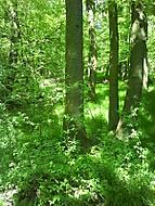 Stromy vo svetle a tieni