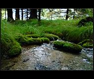 ..lesný potok..