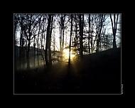 V strašidelnom lese
