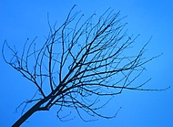 Asi strom...