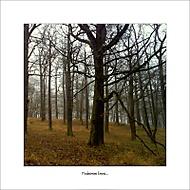 Podzimní lesní...