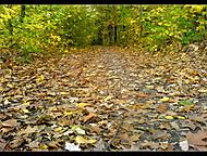 ....jednoduše podzim :) ...