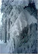 ...kouzlo zimy....