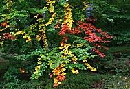 Podzimní toulky