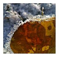 ...když se podzim snoubí se zimou