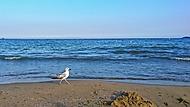 prechadzka pri mori