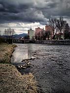Divočina pri rieke