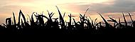 Tráva při západu slunce...