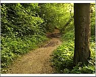 oravský les