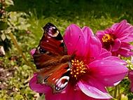 Motýl :-)