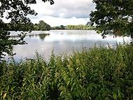 Polomské rybníky