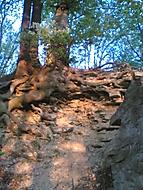 Každý má svůj strom