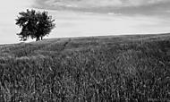 pole a strom
