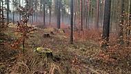 Zimní les bez sněhu