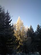 Co dokaze slunce v zime