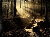 Lesní náladovka