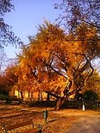 Lužánky na podzim