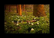 Večer v jarním lese