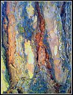 Koža stromu
