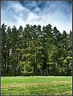 Strom vedľa stromu
