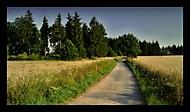 Cesta k lesu