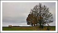 Podzimní odpoledne na pastvě