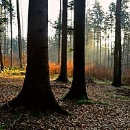 Odpoledne v lese