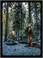 Únorový les