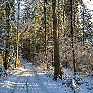 Sobotní ráno v lese
