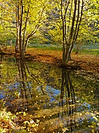 Podzim na potoce.