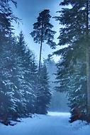 Lednový podvečer v lese