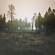 podzim šumava