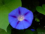 Krása květin...